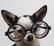 DogInGlasses