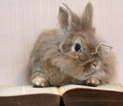 rabbit-book-glasses