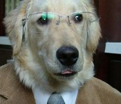 cute-funny-dog-photos-wearing-glasses5.jpg.pagespeed.ce.1knBjvzQqIGBBJ0vyxKV