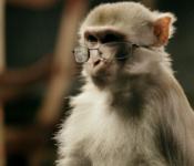 monkey-glasses1